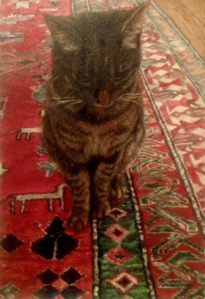 Cat photo by Katie Munro