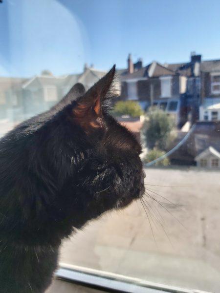 Elmo the cat, watching the neighbourhood by Emilia Loake, aged 16