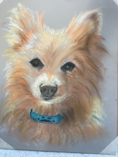 Mi Mi the Pomeranian in pastel by Susan Roberts
