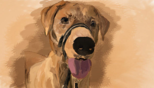 Rolo, digital drawing by Bryony Reed