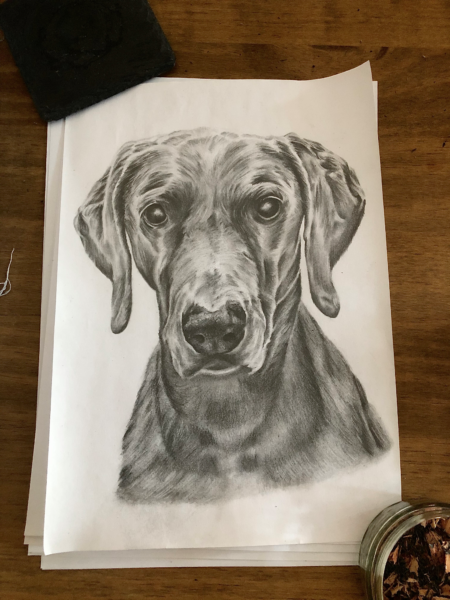 Dog, sketch by Tom Bradley