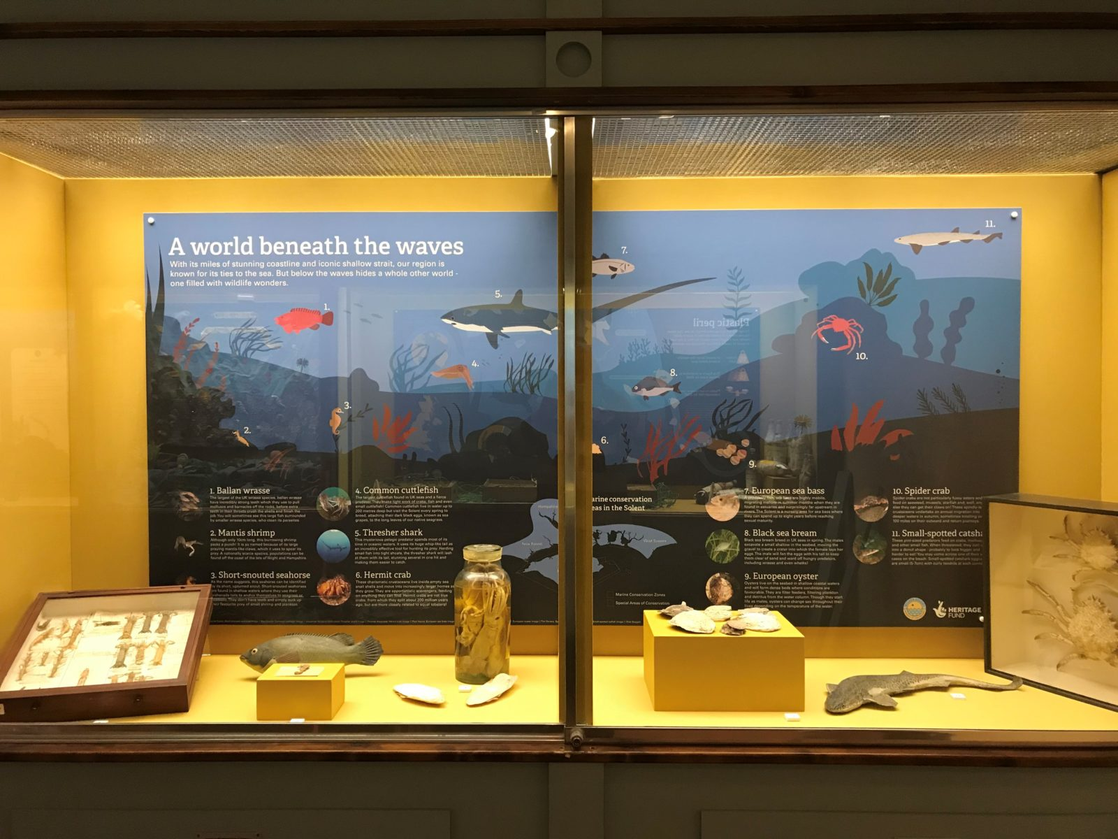 Installation for the Marine Litter Display